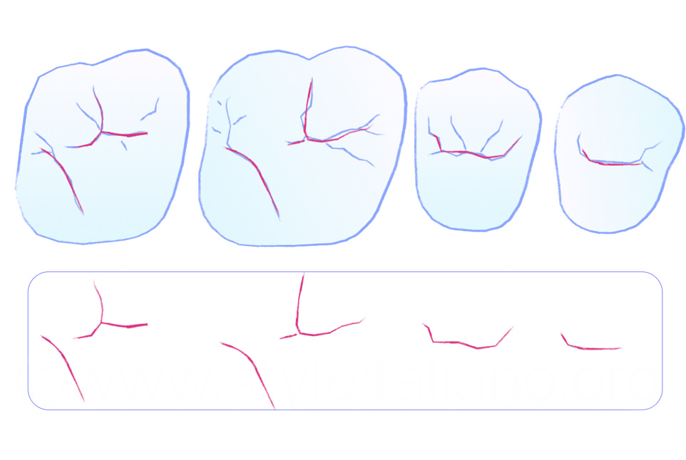 essential lines in upper posterior dental anatomy